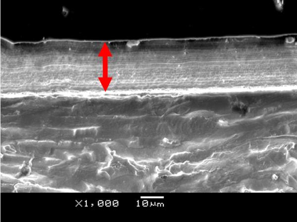 顕微鏡式断面写真
